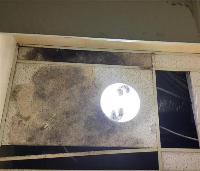 Water Damage Can Lead to Mold in Mobile, AL