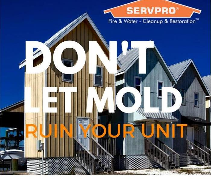 Mold Remediation Trust the Experts with Mold